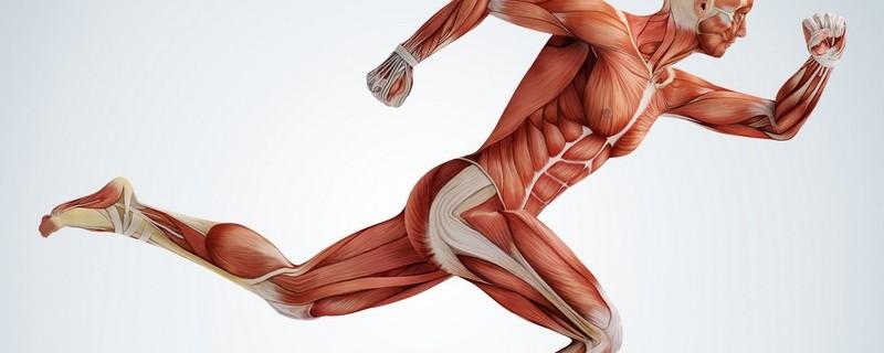 Warum sollten Sie die Muskeln des Kortex stärken?